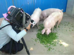 酵农茶香猪养殖示范基地
